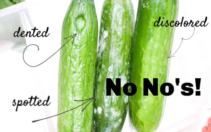 when you are pickling cucumbers, here are things to look for in your cucumbers